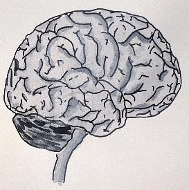 Art 4x4  025 brain  2013-03-14H